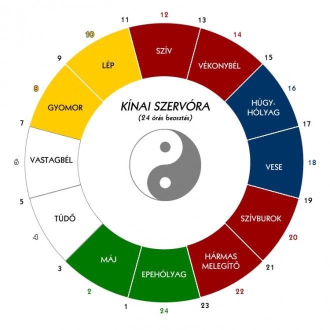 Szerv-óra, ami megmutatja, hogy a 12 fő szervünk mikor aktív!