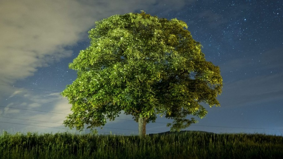 Magyar kutatók felfedezése: a fáknak is van pulzusa