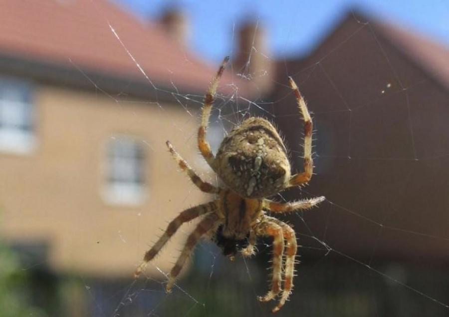 Ha mostanában sok pókot látsz, az nem véletlen. Ezt jelenti!