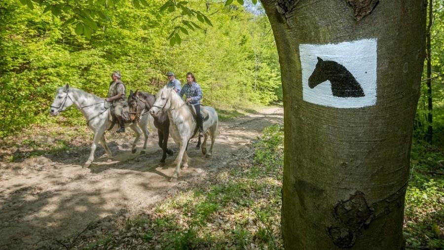 Lóháton is bejárhatók a Visegrádi-hegység legszebb részei