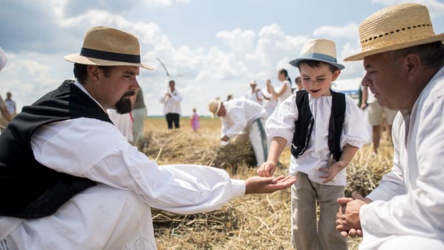 Felidézték a hagyományokat Mohácson: így aratott a magyar ember a régi időkben